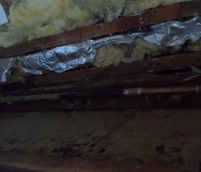Mold From Leaking Pipes Affects Insulation on Long Island, NY
