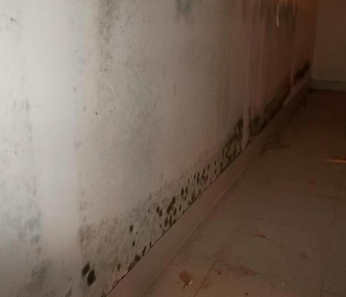 Mold will spread and grow when ignored