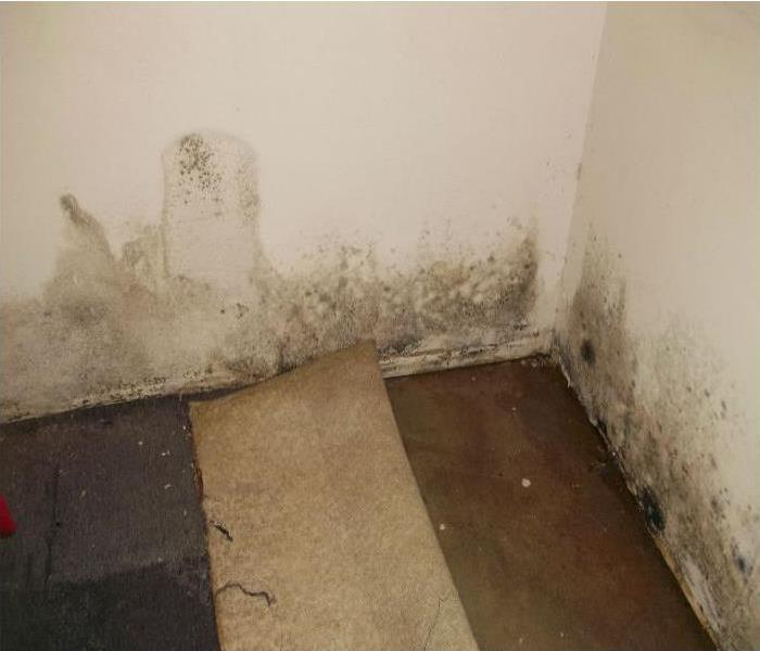 Mold Remediation Tips to detect Mold
