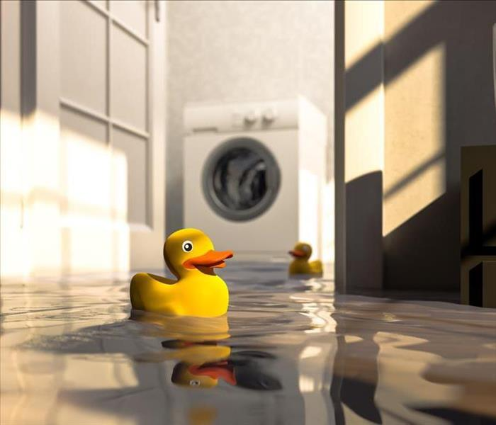 Two rubber ducks floating in standing water, with a washer in the background.